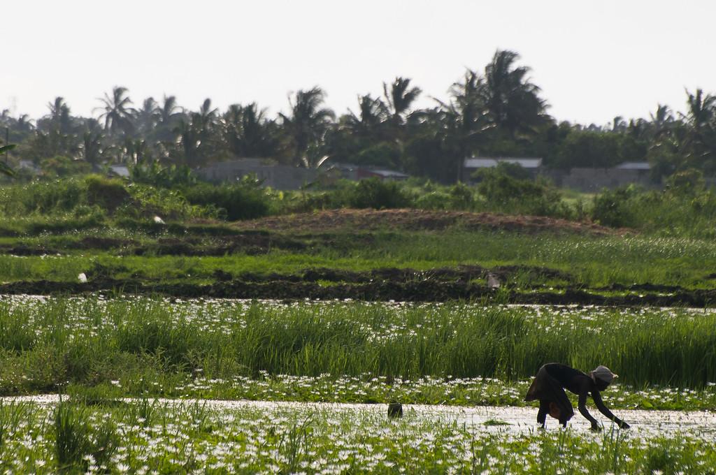 2009-04. planting rice.