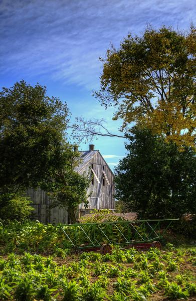 autumn 2014 - tobacco barn(p).jpg