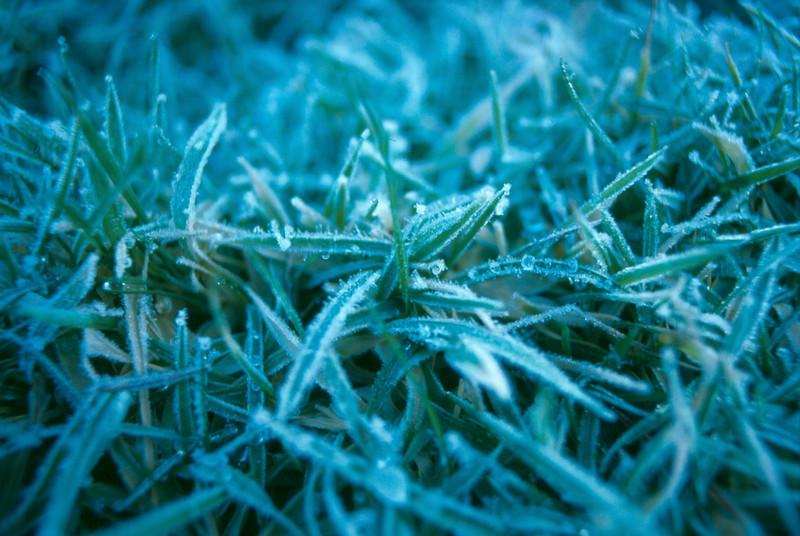 grassfrostjpg.jpg