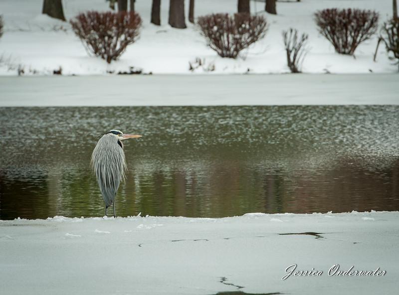 VA_Snow_ART_JOP-0905.jpg
