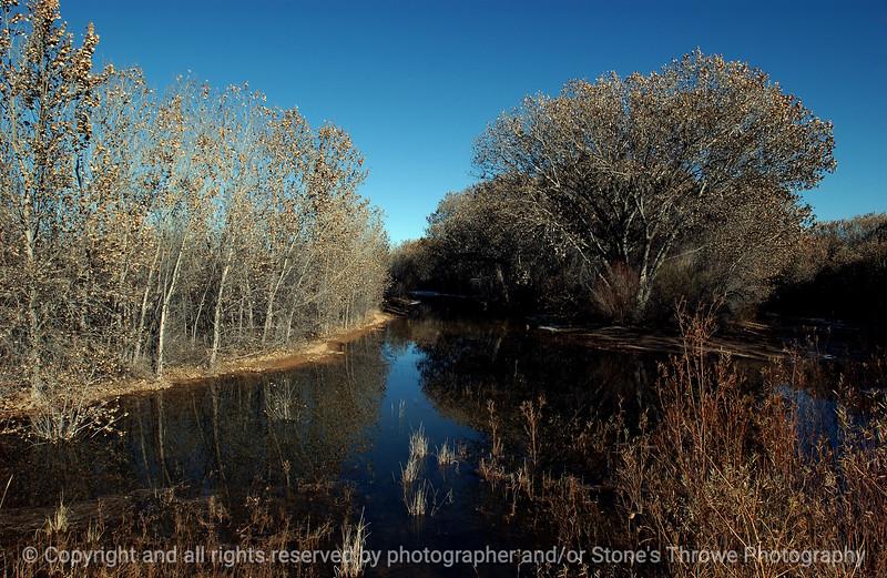 015-trees-bosque_del_apache_nm-01dec06-c1-9800.jpg