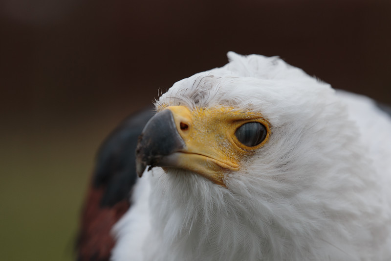 Steven ruiter, roofvogel workshop at Het Muithuis, Langenboom. info@muithuis.nl