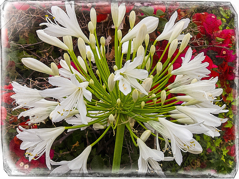 June 9 -flowers.jpg