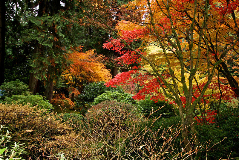 Portland Japanese Garden  11-11-11  3567.jpg