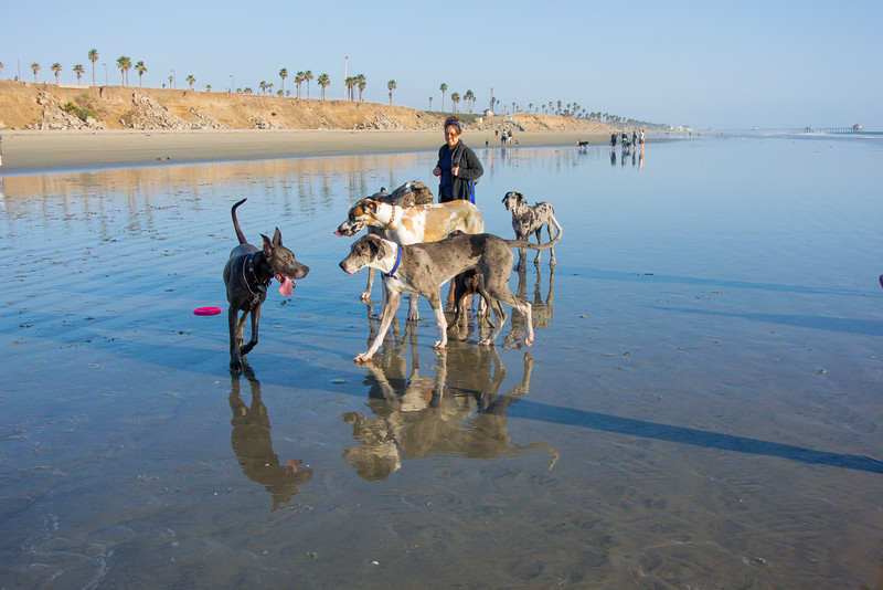 dogs_beach-26.jpg