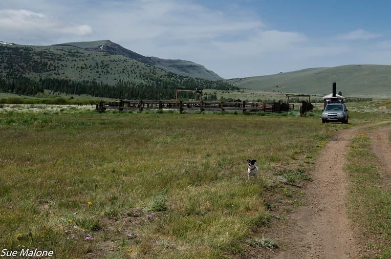 05-30-2020 03 Post Meadows Horse Camp-5.jpg