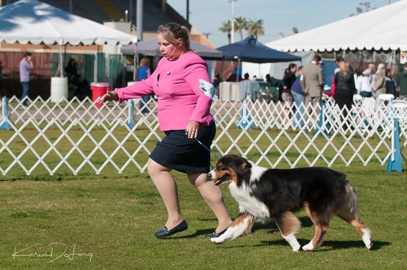 20170205_Australian Shepherds_Lost Dutchman Kennel Club-48.jpg