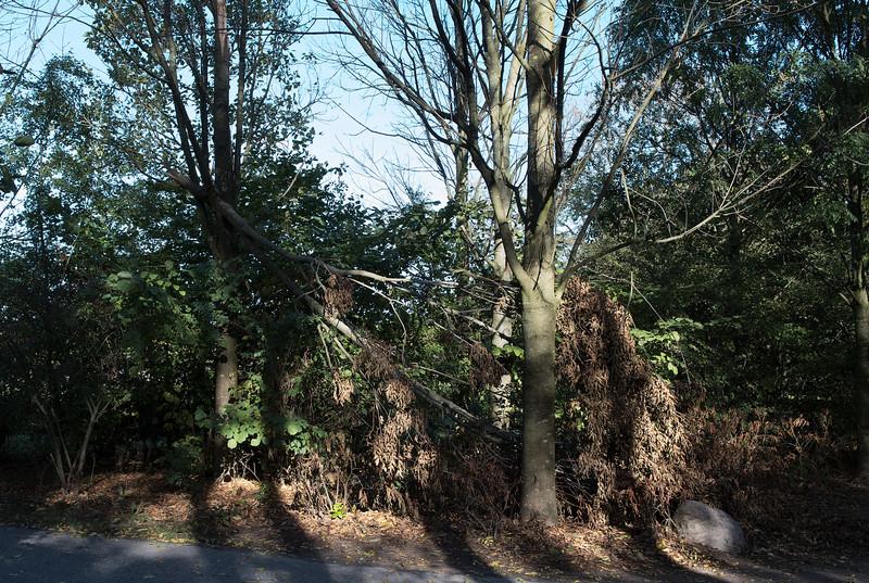 Natuur in Arnhem Noord