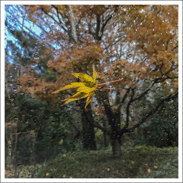 yellow leaf-1639.jpg