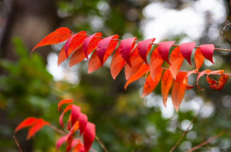 leaves in bright orange