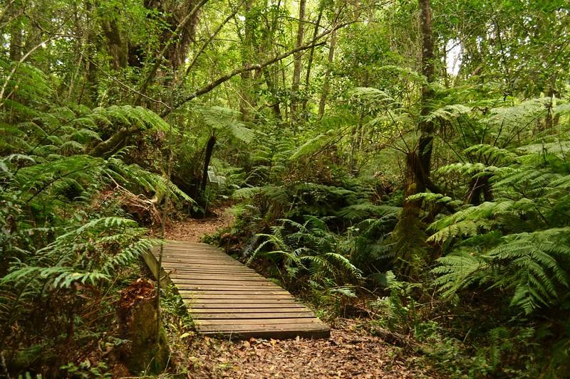 walking path through dense forest
