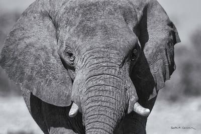 Elephants and Rhinos