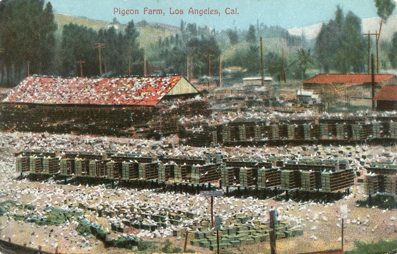 Pigeon_Farm_Los_Angeles_Cal_154_mailed_1909.jpg