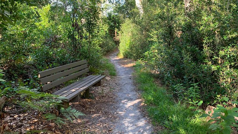 Park bench in woods
