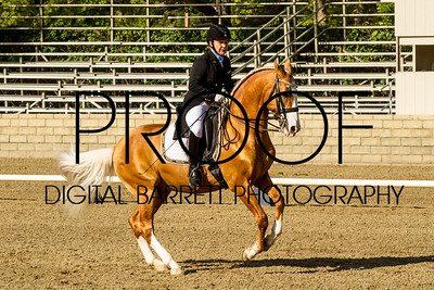 Thursday, Large Oval: Dressage