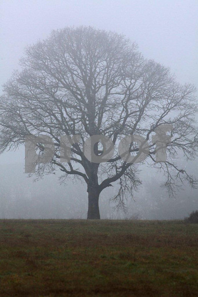 There is something about a lone oak in the fog that gets me everytime.