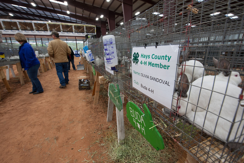 Hays_County_Show-6570.jpg