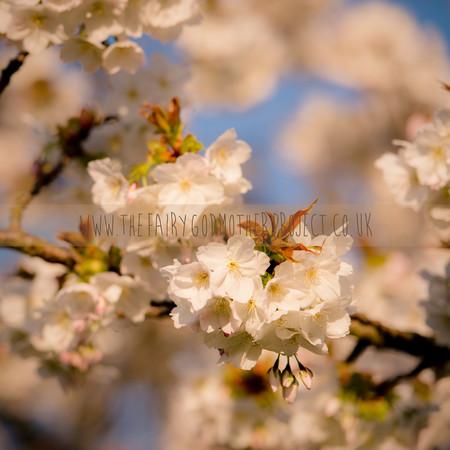 Spring Flower Gallery