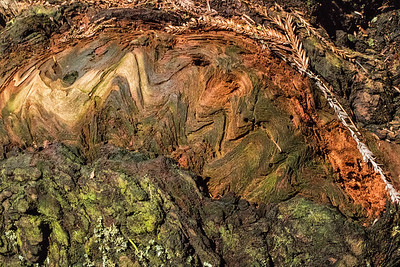 Barkscape: Redwood Tree | Redwood National and State Park