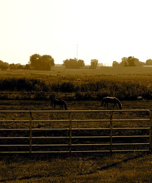 2006-09-06 at 09-56-31.jpg