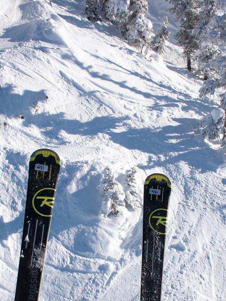 tree skiing 2.jpg