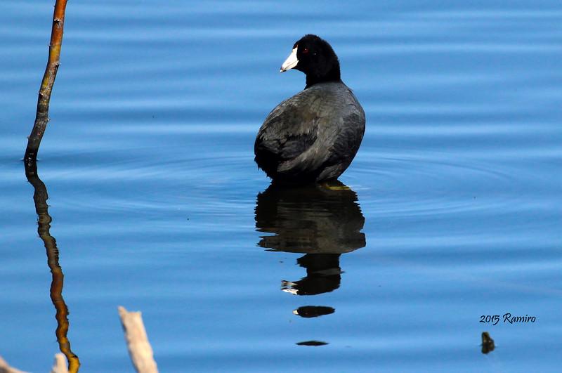 duck2 3-6-15 211.jpg