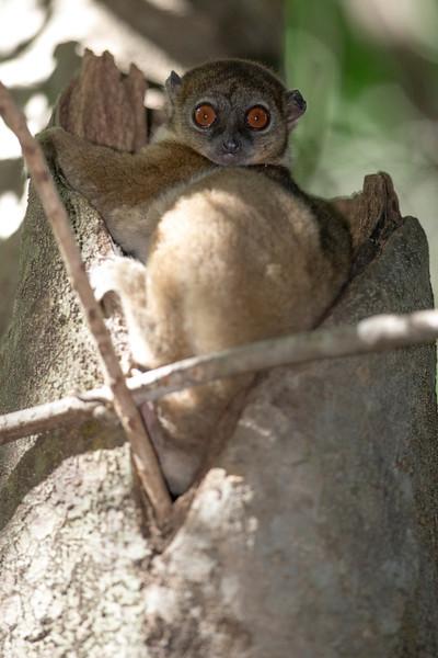 Madagascar_2013_FH0T2510.jpg