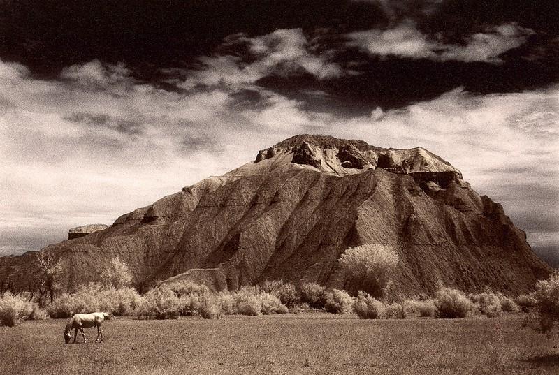 Desert Horse, Utah