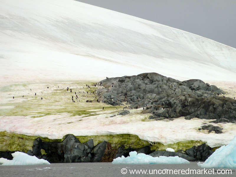 Penguins on the Ice - Antarctica