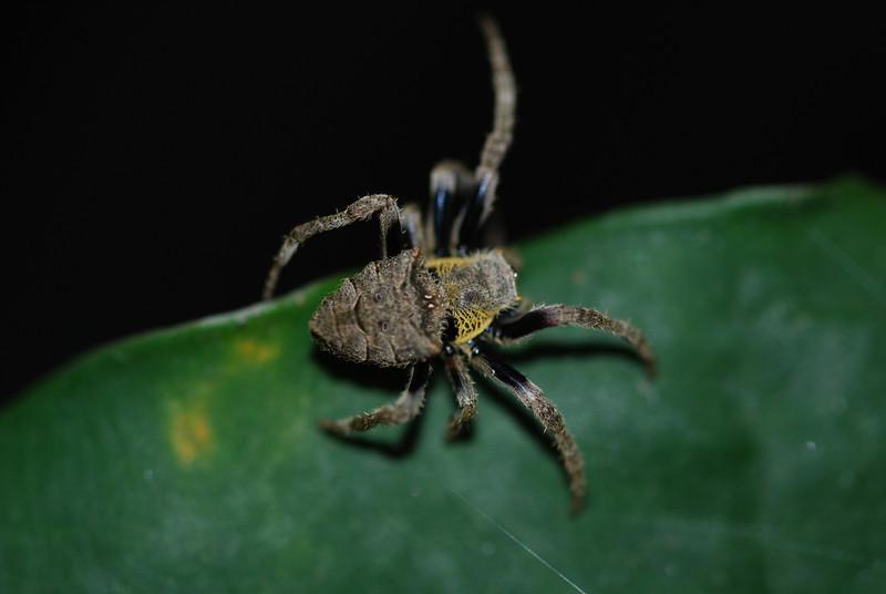 Spider- Vietnam