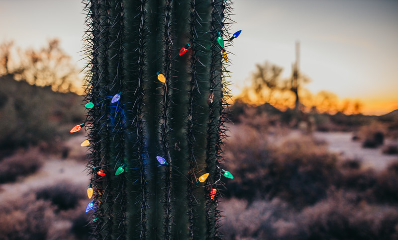 HolidayMini-SunshynePix-1194.jpg