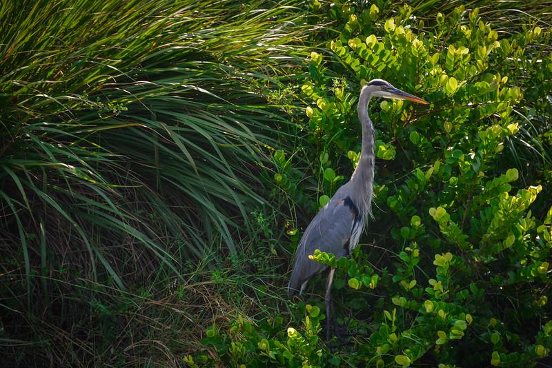 Everglades-25.jpg
