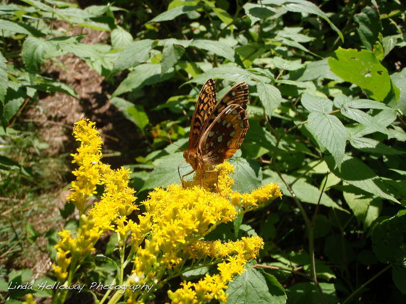 On the trail we saw a brown and orange butterfly.  It reminded me of a Gulf Frill.