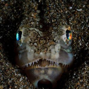 Fish of Anilao