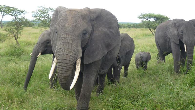 Central Serengeti, Africa (May 16-17, 2012)