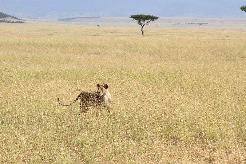 Kenya Part2 '15 575.JPG