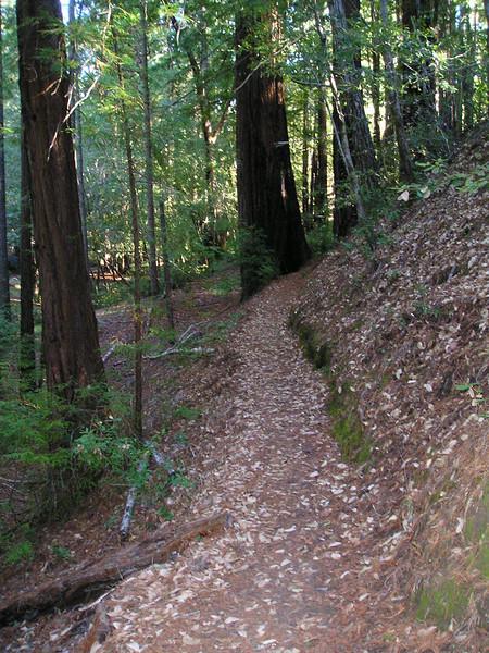 The Shadowbrook Trail runs along a hillside among redwoods.