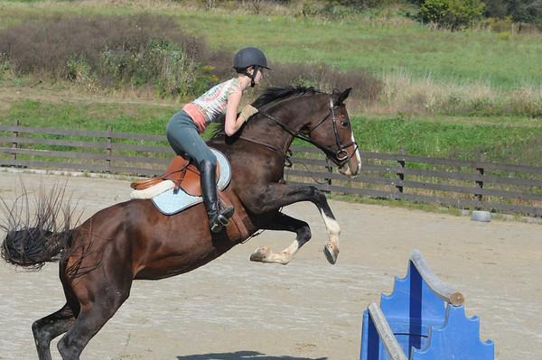 Erin's training horses