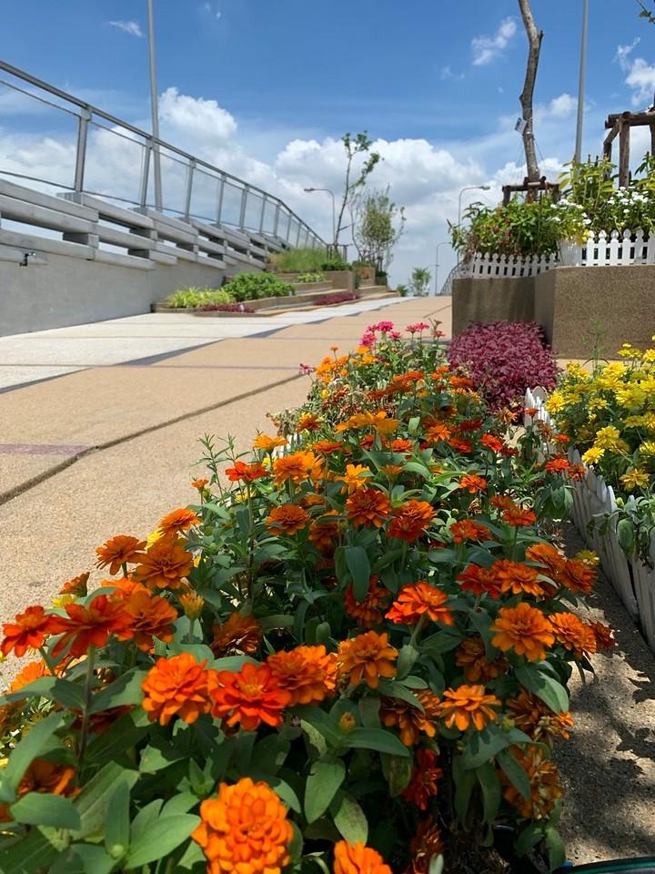 Flowers on Sky Bridge
