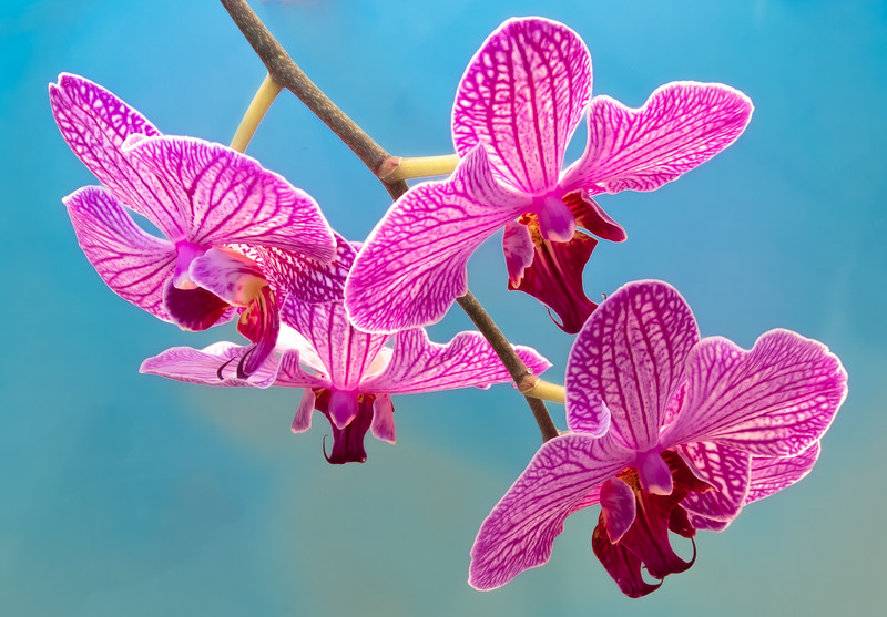 orchid 2020 (4 of 4).jpg
