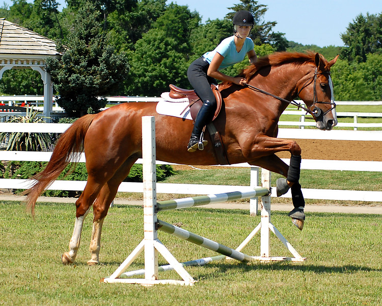 Complete Guide to Hunter Seat Training, Showing and Judging