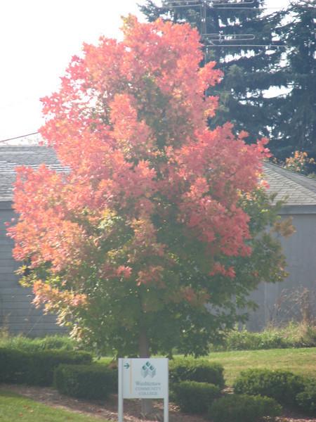 Fall pics 2008 021.jpg