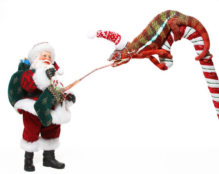 Chameleon Christmas Candy.jpg