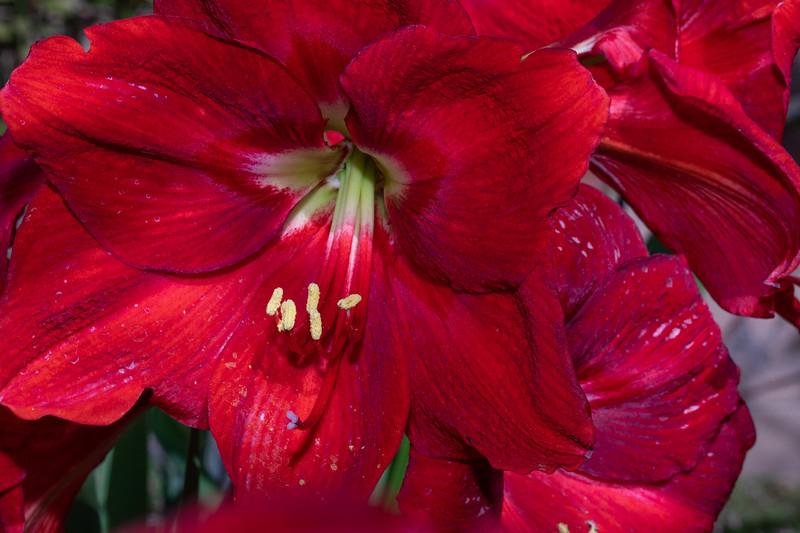 red_flowers3-9732.jpg