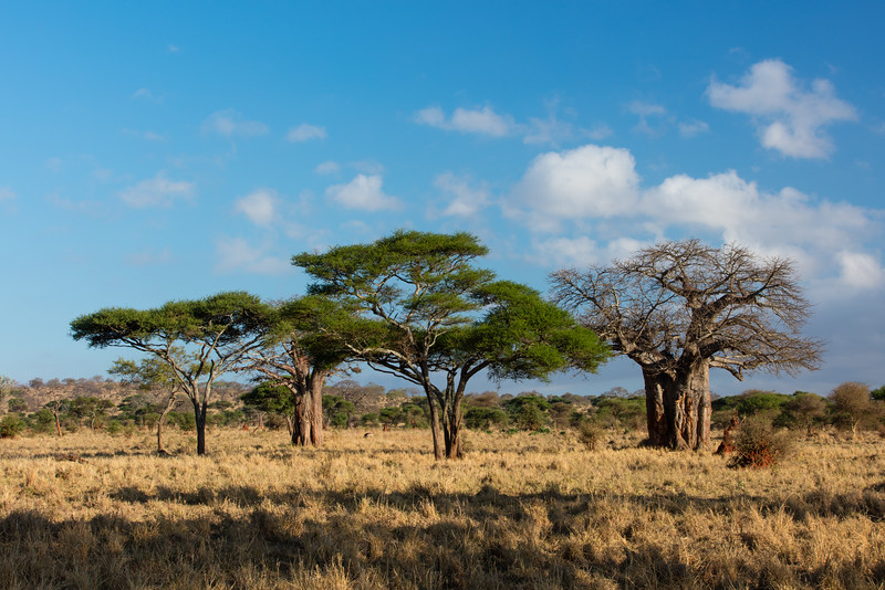 Africa - 102116 - 8073.jpg