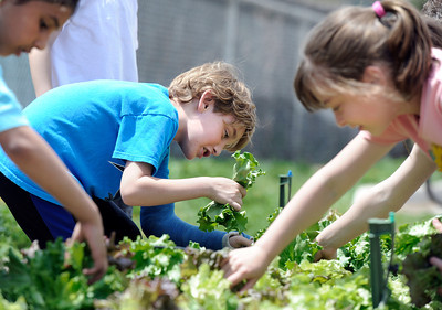 Flatirons Elementary Garden to Table Program