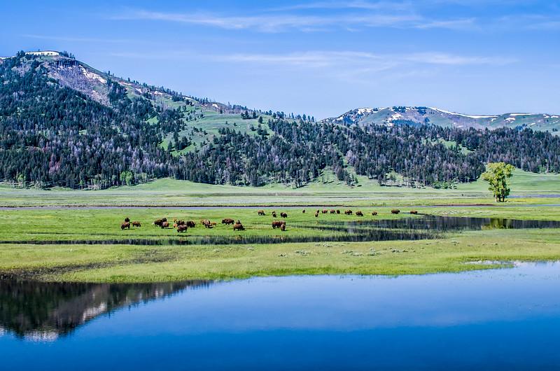 Yellowstone_Landscapes-1.jpg