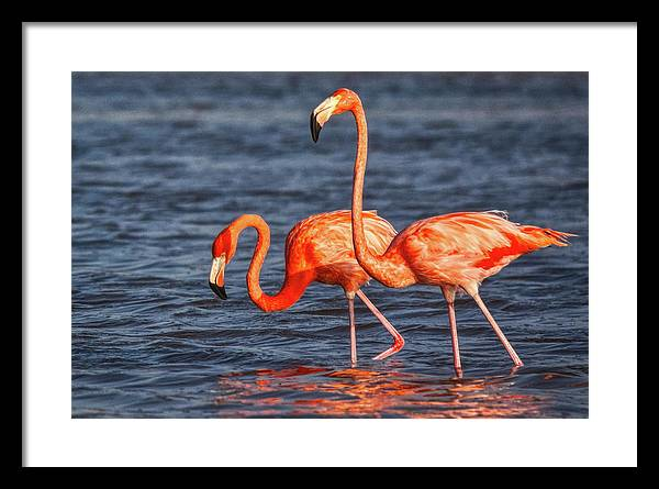 Two Pink Flamingos Framed Print