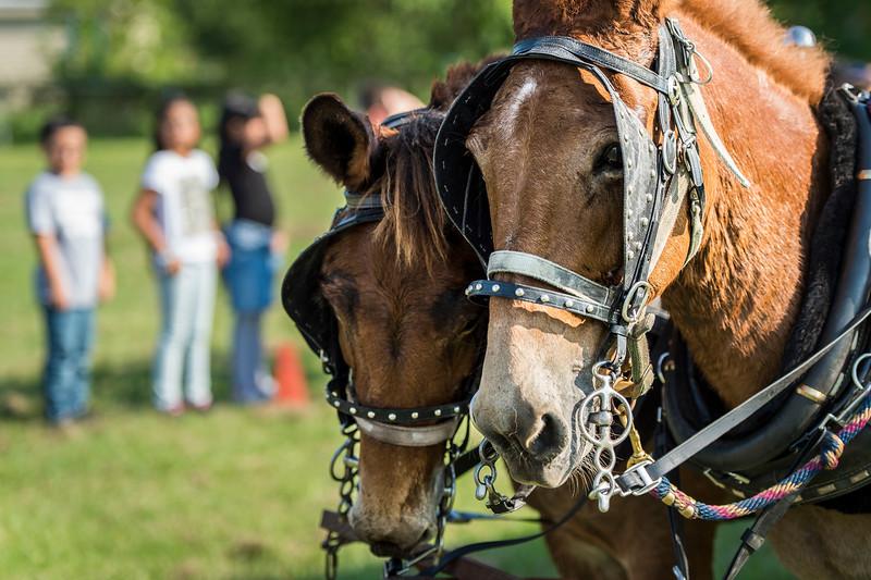 Rodeo_Trail Ride_2019_047.jpg