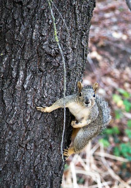 curious squirrel.jpg